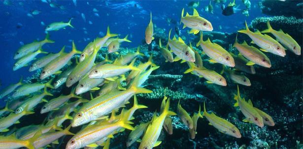 El cambio climático y la contaminación asfixian la vida en los océanos